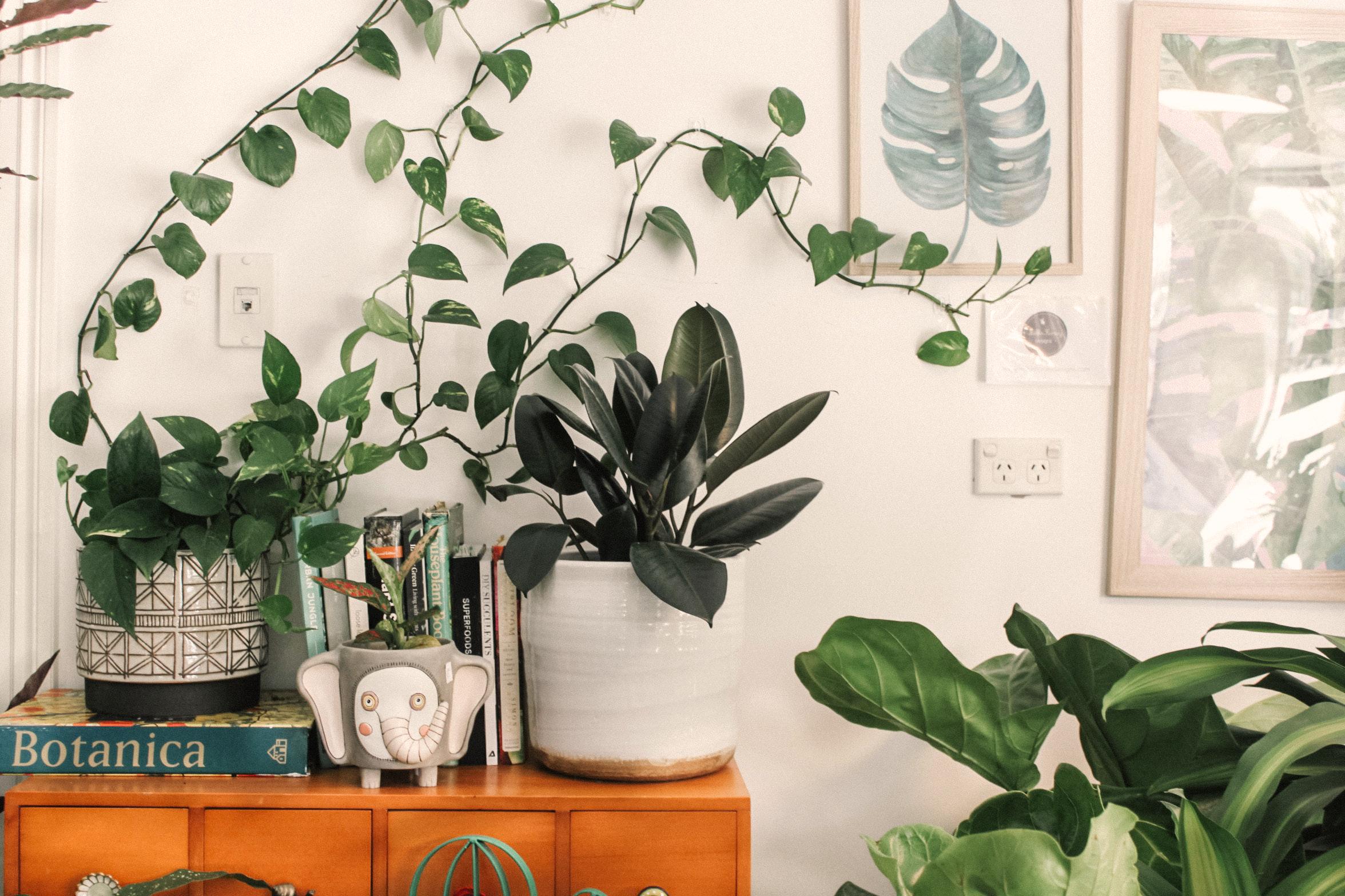 10 pflegeleichte Zimmerpflanzen